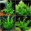 Java Fern Microsorum Bundle – 4 Species (Trident, Windelov, Narrow Leaf, Philippine) Easy Low Light Aquarium Plants – Snail Free Guaranteed
