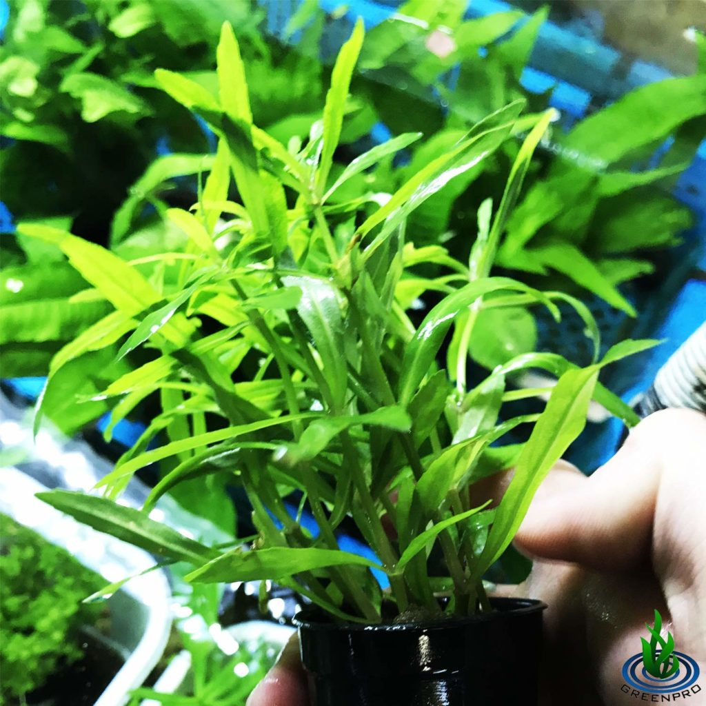 Freshwater Aquarium Plants For Beginners